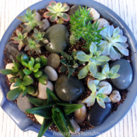 Top down view of the succulent rock garden planted in a thrifted kitchen pot.