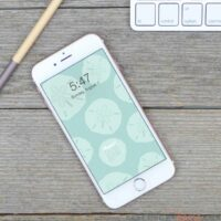 Smartphone with the sand dollar digital design on the home screen as the free digital background for August.
