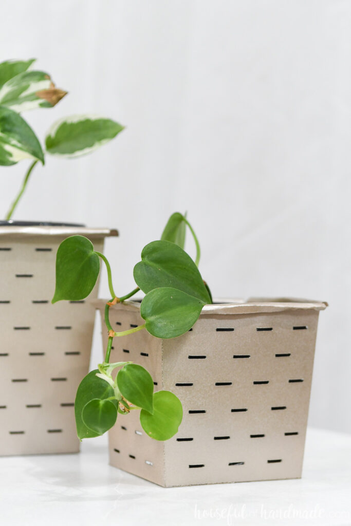 Close up of the small paper flower pot with a pathos plant cascading over the side.