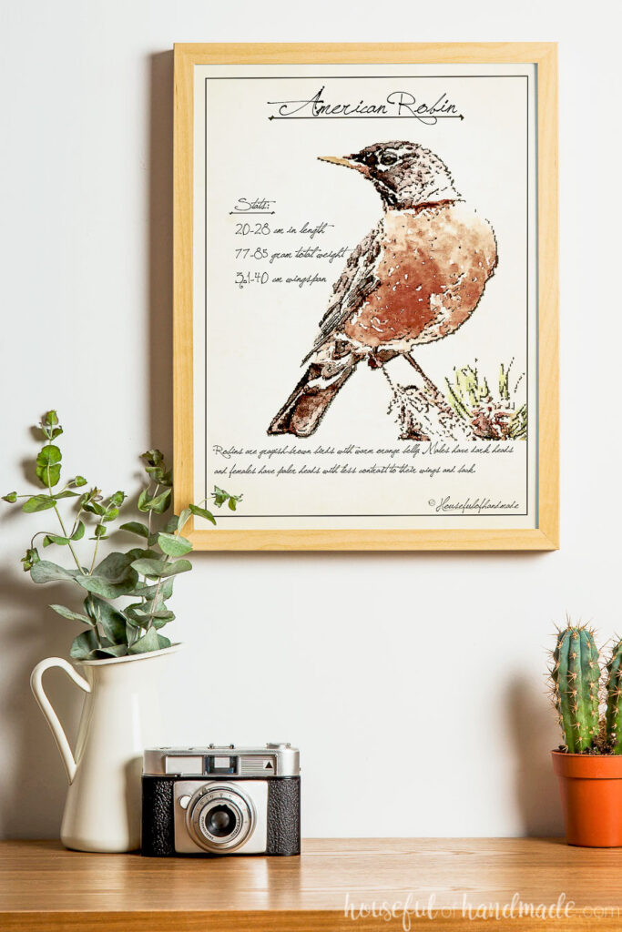 Picture frame with vintage birdwatching sketched art of an American robin inside it.