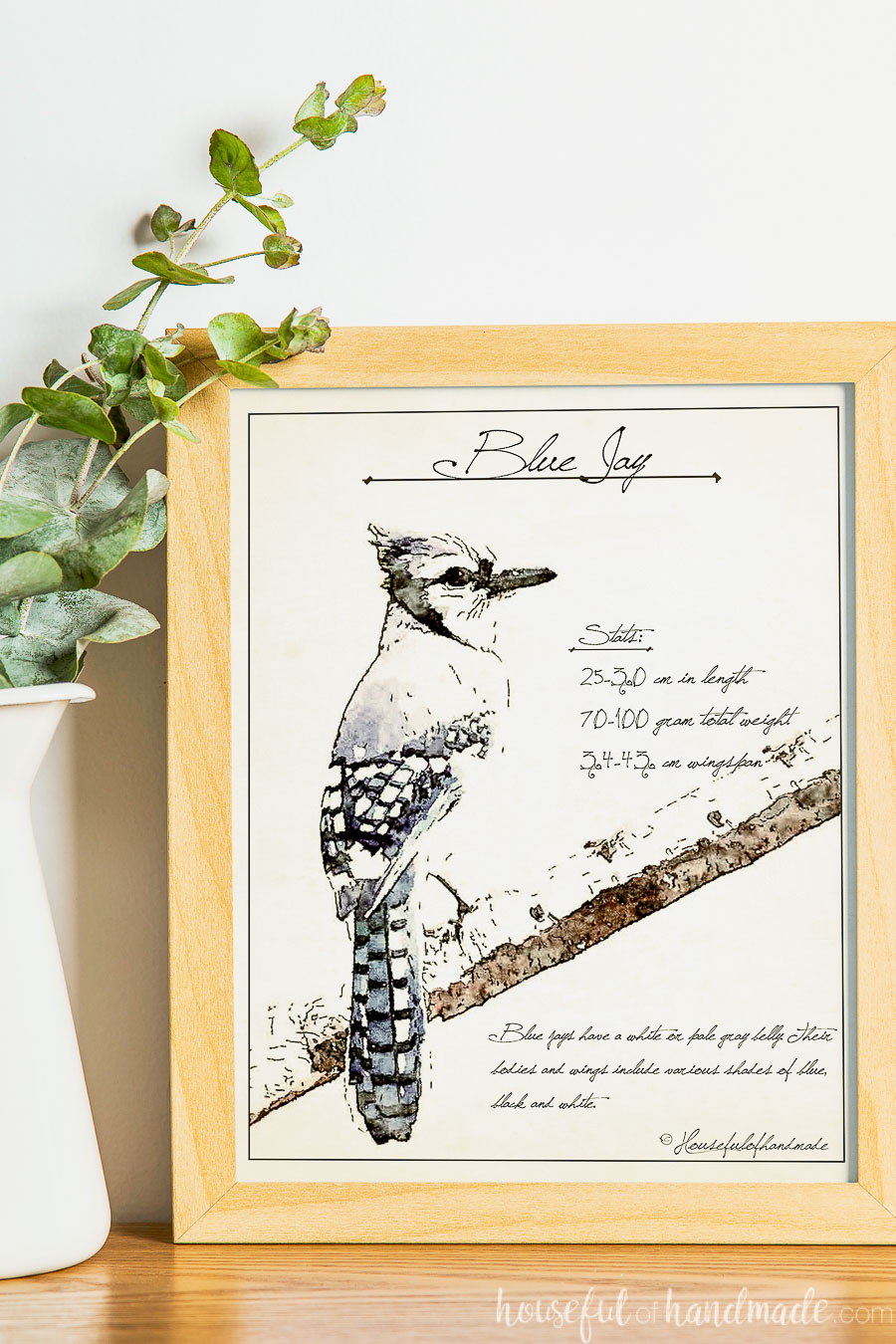 Sketched art of a blue jay with stats about the species in a frame next to a vase.